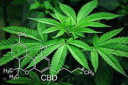Bio CBD Produkte