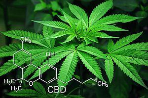 Bio CBD Öl 5%